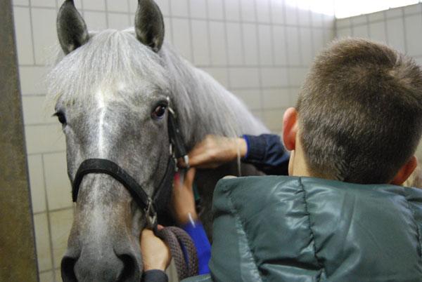 pferd hyaluronsäure füttern